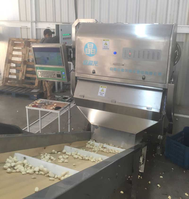 garlic-color-sorter-in-Mexico.jpg