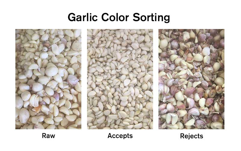 Garlic Color Sorting Demo.jpg