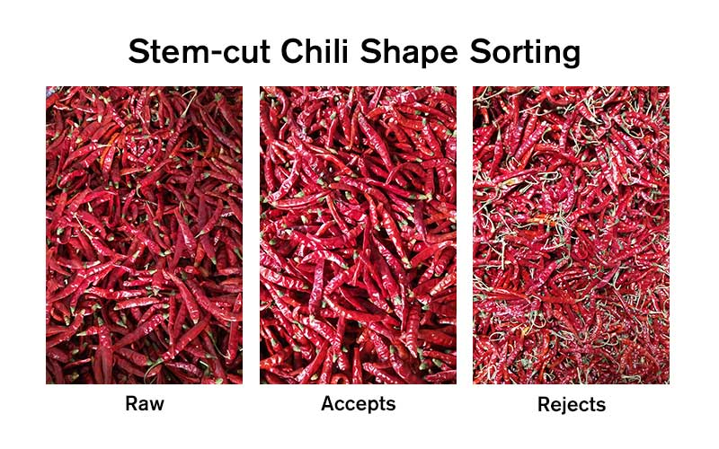 Stem-Chili Shape Sorting.jpg